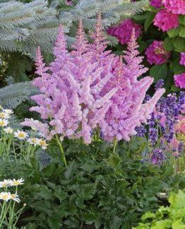 d7039b6f49b45fe1afa87f56bab54cae--sun-garden-shade-garden