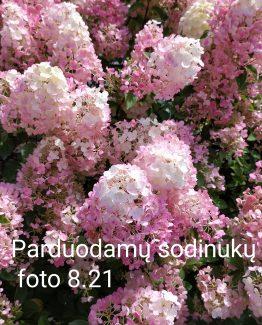 IMG_20200826_081708